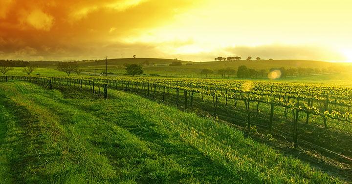 Barossa Valley Sunrise
