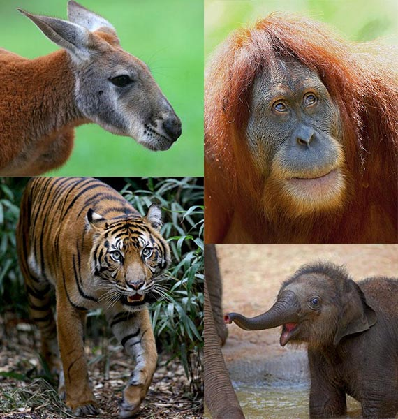 Melbourne Zoo - Cheap Car Hire Options & No Booking Fees!